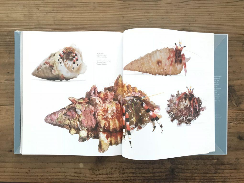 海の美しい無脊椎動物